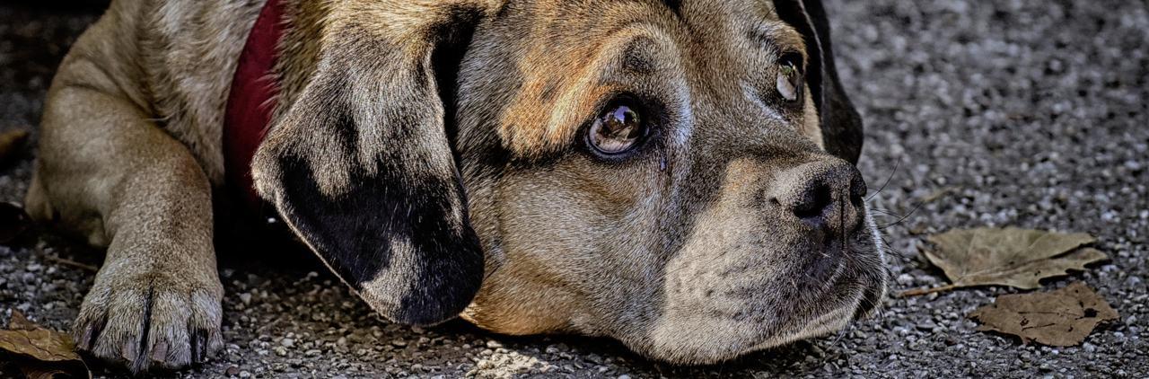 Symptome bei IBD / IGOR des Hundes